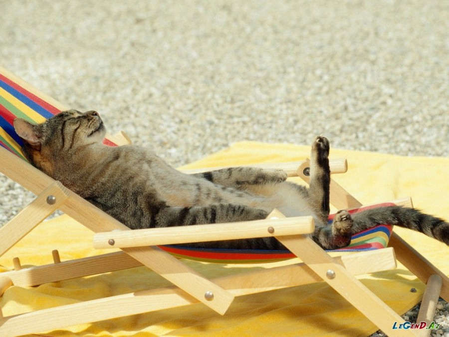 1320346835_animals_cats_sunbathing_cat_024863_