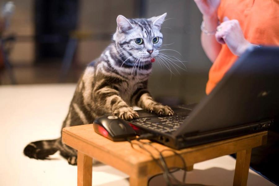 Кот устанавливает антивирус на ноут