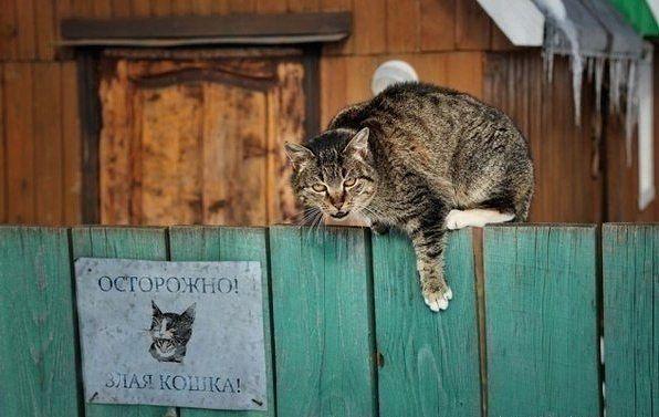 кот-сторож