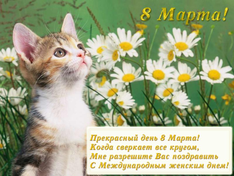 8 марта открытка котенок