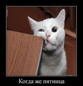 hotdem_ru_091510224001005489164