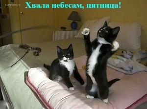 zveri_38