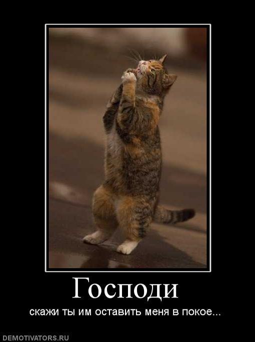 кот просит оставить его