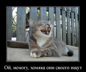 hotdem_ru_167876183402268468503