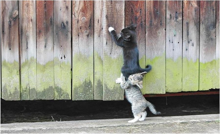 01.03. коты в пост 2