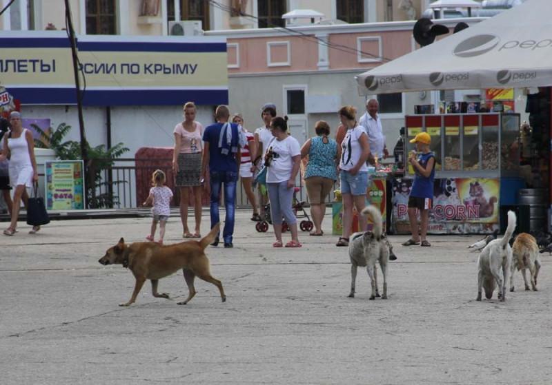 псы Крыма