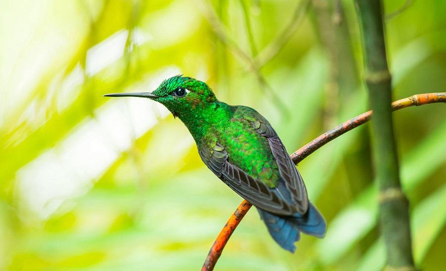 01. Первый раз я увидела колибри в Коста-Рике (1)