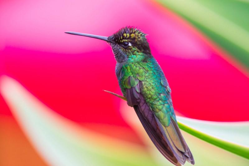 08. И да, у меня есть книга-определитель всех птиц Коста-Рики. Я же говорила, что я люблю птиц ;)