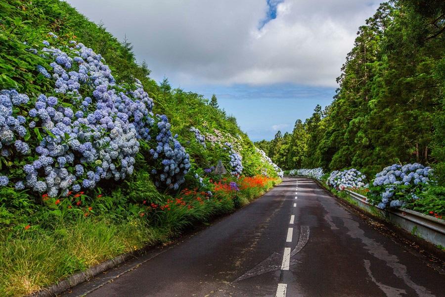04. Дорога в центре острова