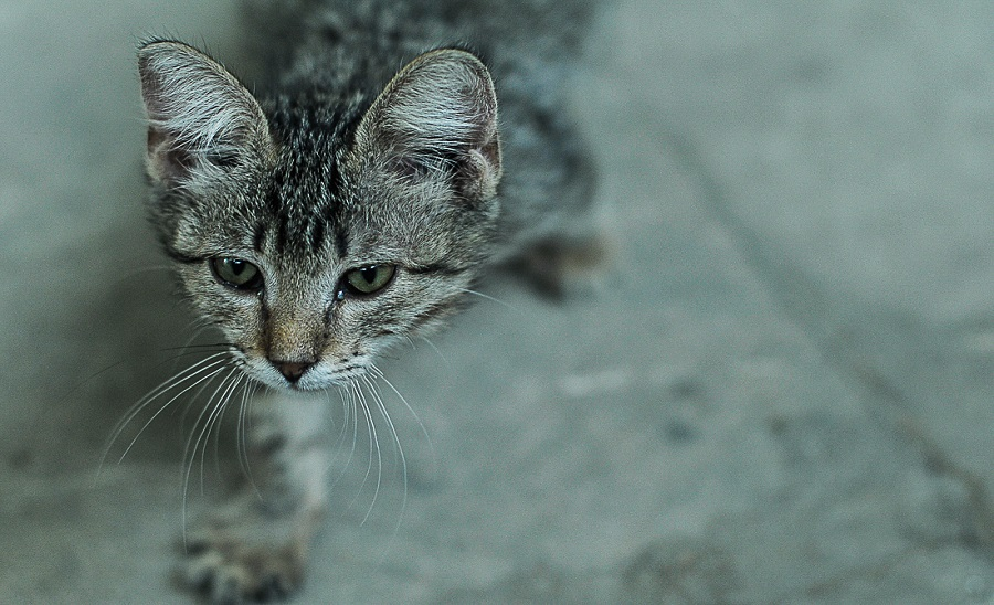 01. Осторожно! На улочках Старого города вас оккупируют бакинские котики.