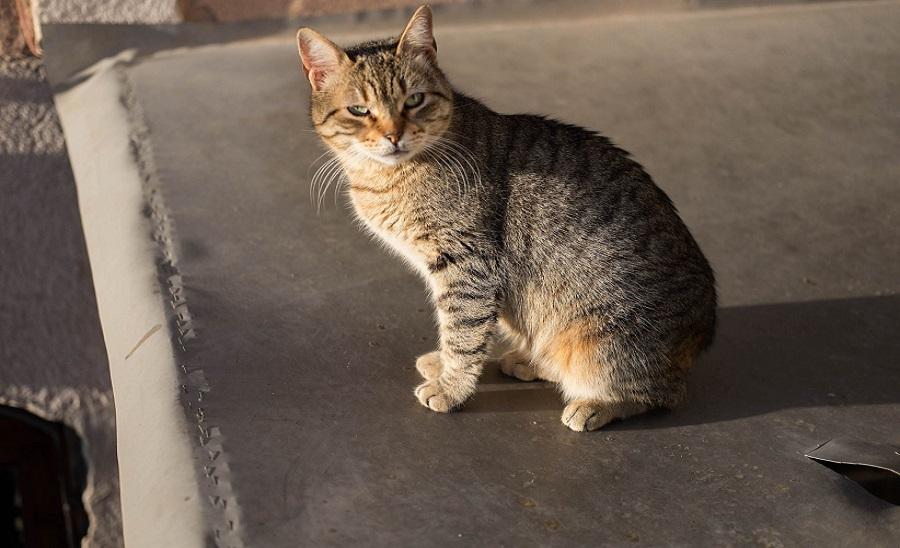 01. Посмотрите «Город кошек», если еще не смотрели. Все именно так, как там показывают.