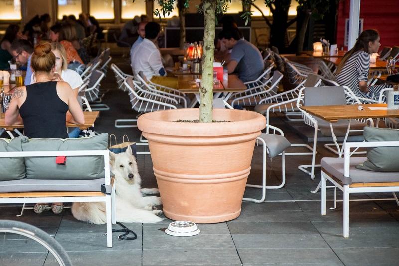 02. Собак тут любят. Они воспитанные. В кафе и ресторанах им приносят воду в мисках.