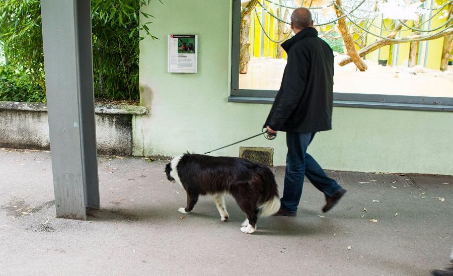 01. А эти фото сделаны в зоопарке! Да, да, в зоопарке. Тут собак любят, с ними можно ходить в зоопарк!