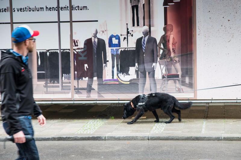 04. Сразу видно, что собака рабочая, служебная, воспитанная, т.к. из общей массы оляпистых ошейников выделяется наличием рабочей шлейки известного в узких кругах julius k9.