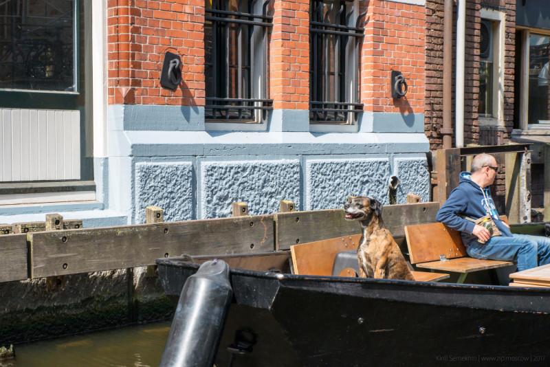 08. Пойду, пожалуй, с собакой на канале поплавую, дорогая …