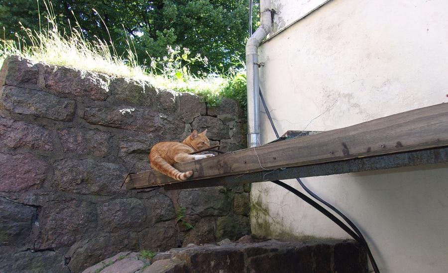 01. Этот кот — не просто кот. Он (на минуточку) Сэр Филимон. Живёт в Выборгском замке. Официально состоит на содержании.