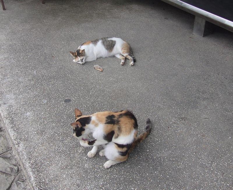 04. Обычная картинка для Таиланда. Эти кошки ничьи.