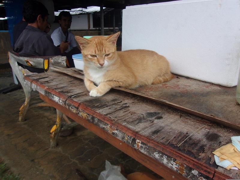 05. А этот кот хозяйский. Встречает туристов на акваферме.