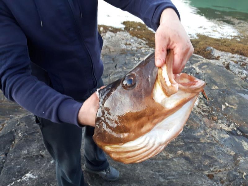06. Местные рыбаки только что поймали треску.