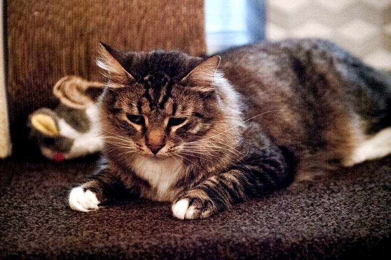 09.Котики. Везде котики