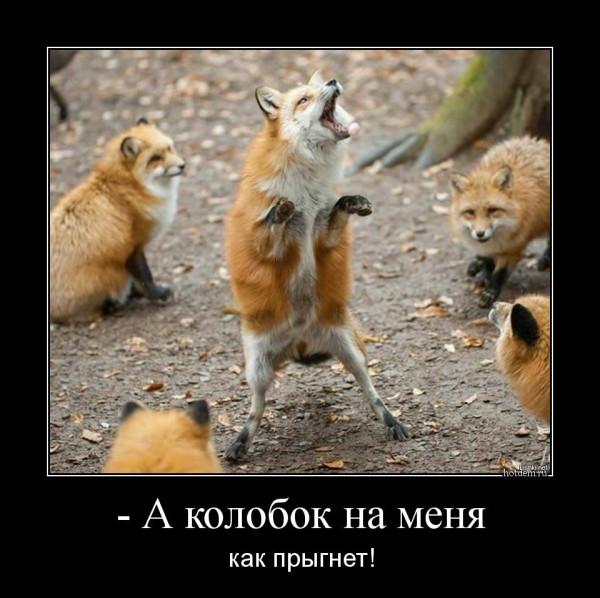 hotdem_ru_333773478076575610641
