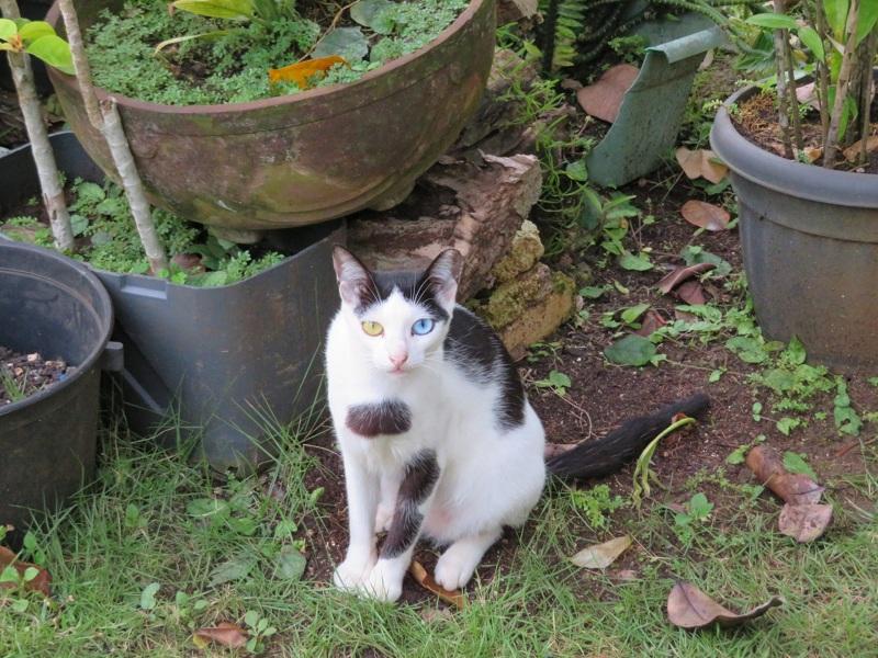 02.Кошка понравилась, живущая дома у одного нашего знакомого. На фотках кошек с разноцветными глазами видел много, а вот живьем первый раз
