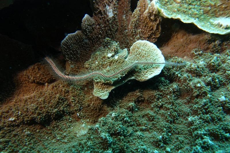 03.Диковинное морское животное, доселе невиданное