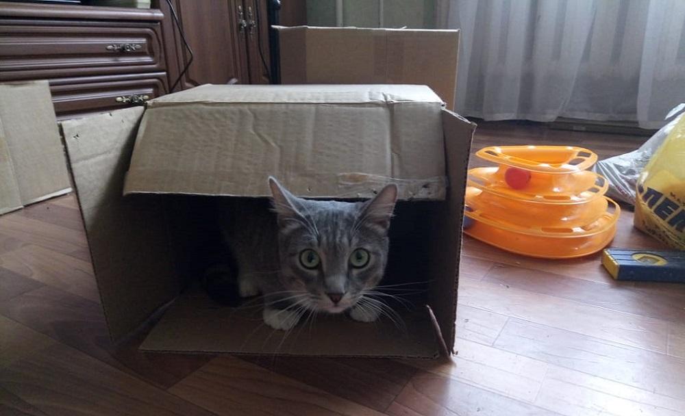 01. кот в коробочке