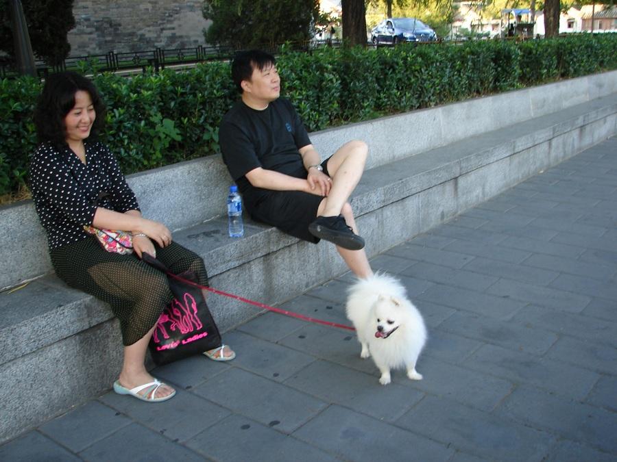 02.Китайцы больше собачники, чем кошатники. Хотя в некоторых ресторанах можно попробовать собачатину.