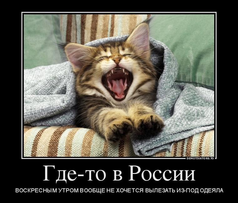 Коты утром демотиваторы