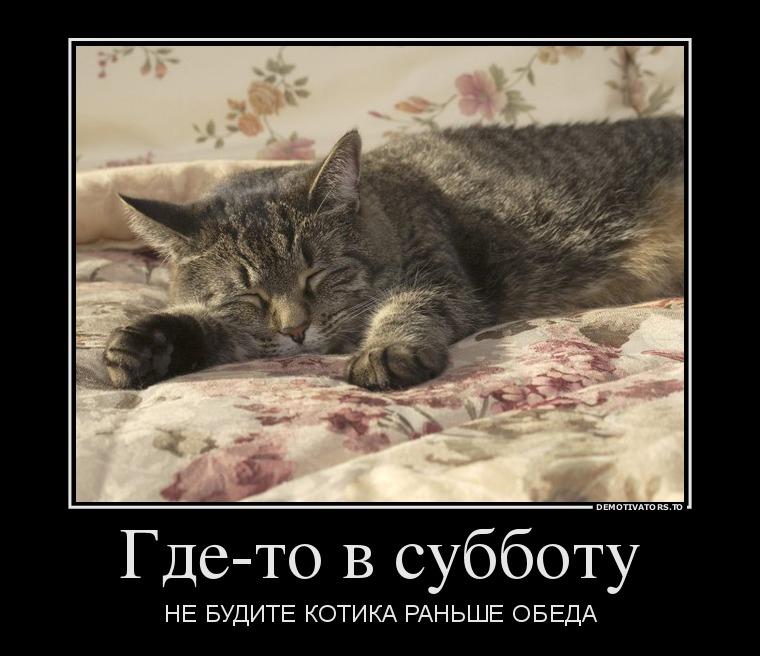 демотиваторы коты в субботу красивая