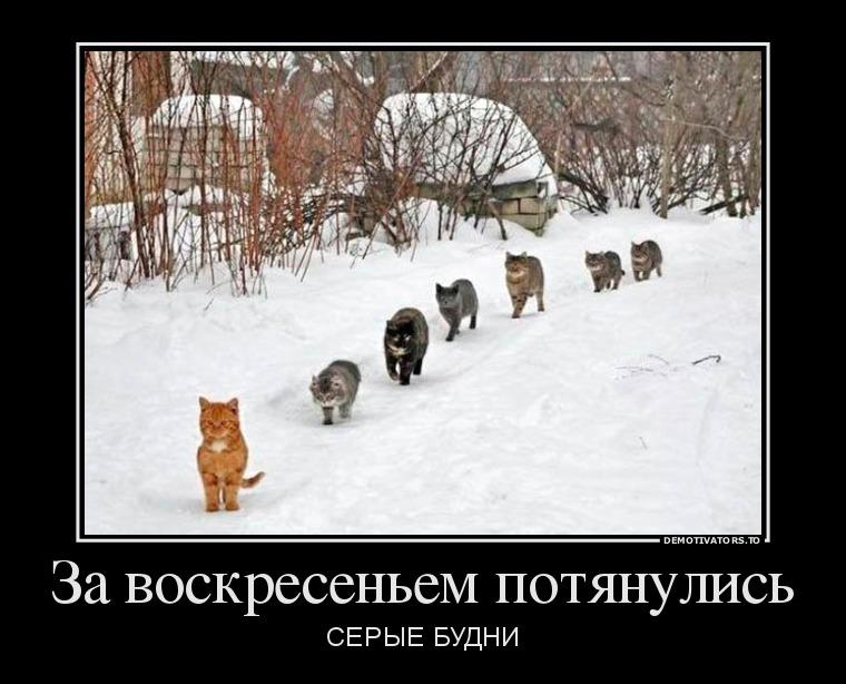 922698_za-voskresenem-potyanulis_demotivators_to