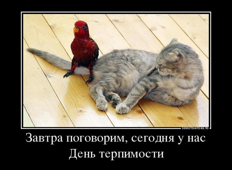 16.11_zavtra-pogovorim-segodnya-u-nas-den-terpimosti_demotivators_to