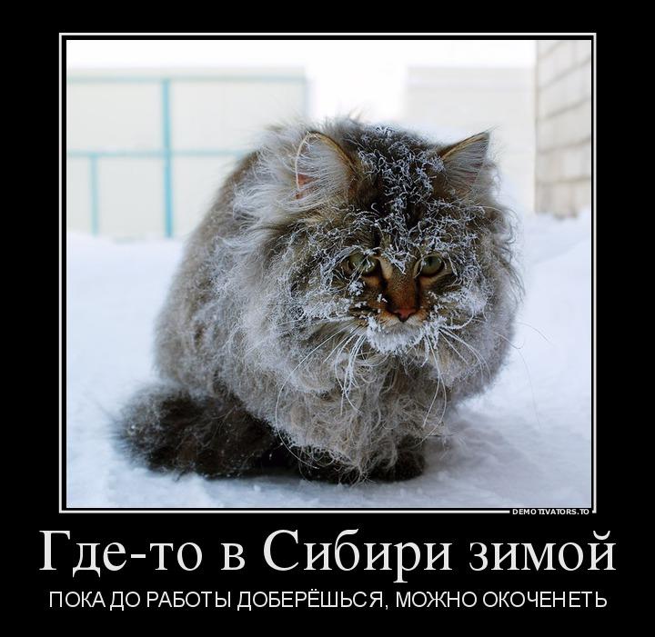 20.11- gde-to-v-sibiri-zimoj_demotivators_to