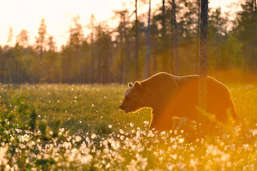 Фоторепортаж: Финляндия - край тысячи озёр 02