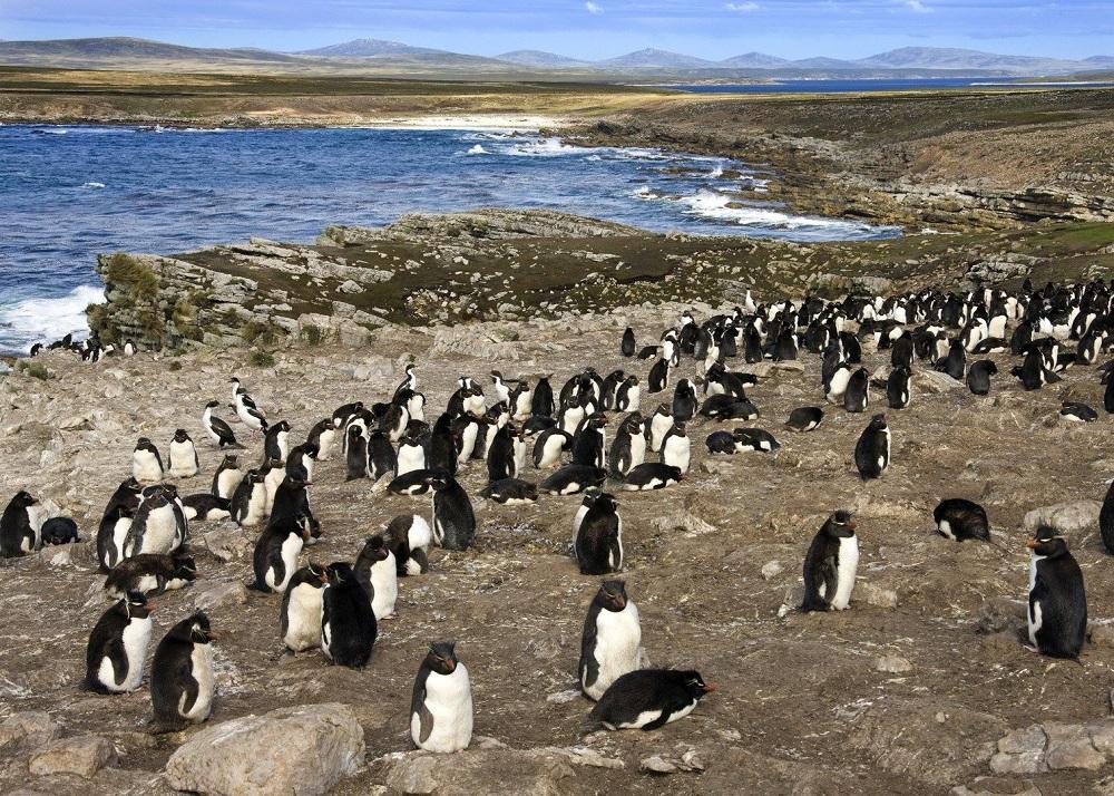05 пингвины