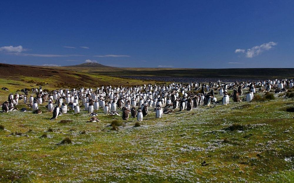 05 пингвины2