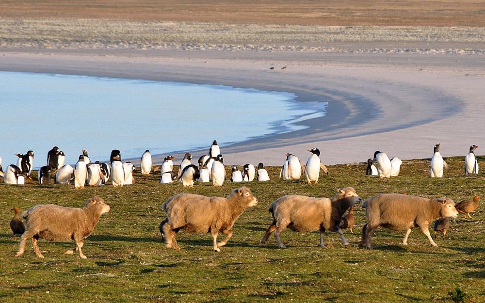06 парад овец