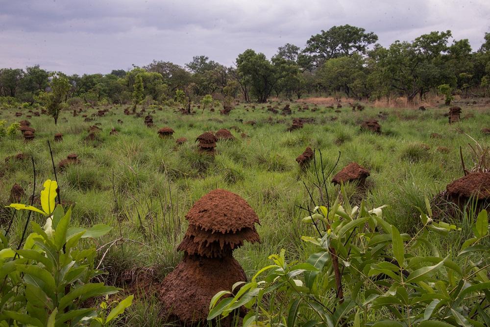 Фоторепортаж: Центральноафриканская Республика - страна прекрасная и очень 06