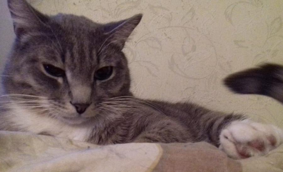 01 кот 1