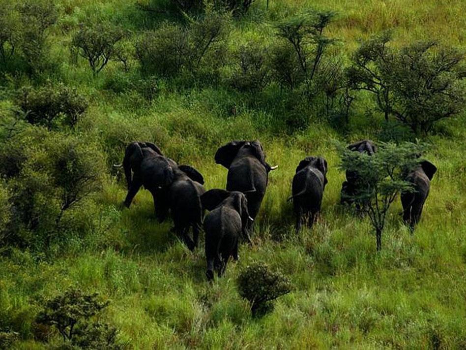 05 слоны