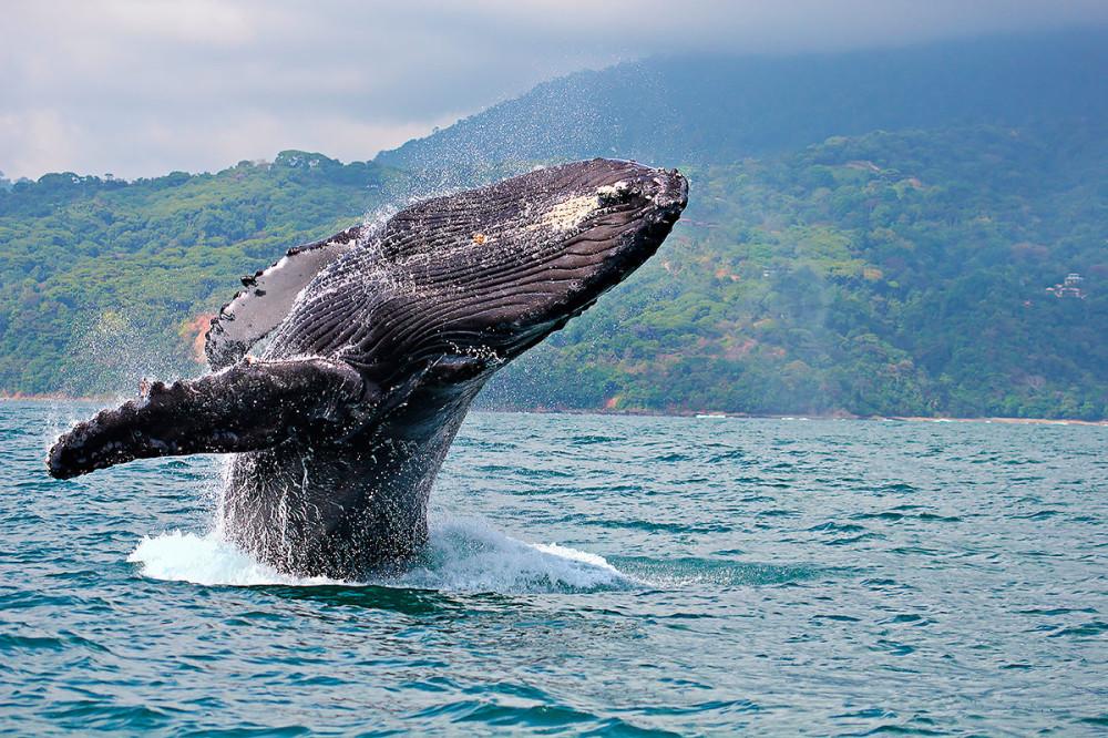 06 киты