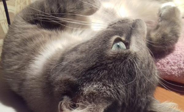 Мысль кота
