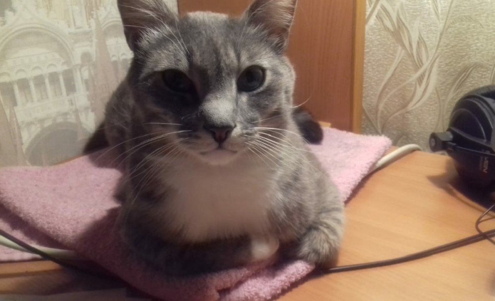 Кот-медитатор