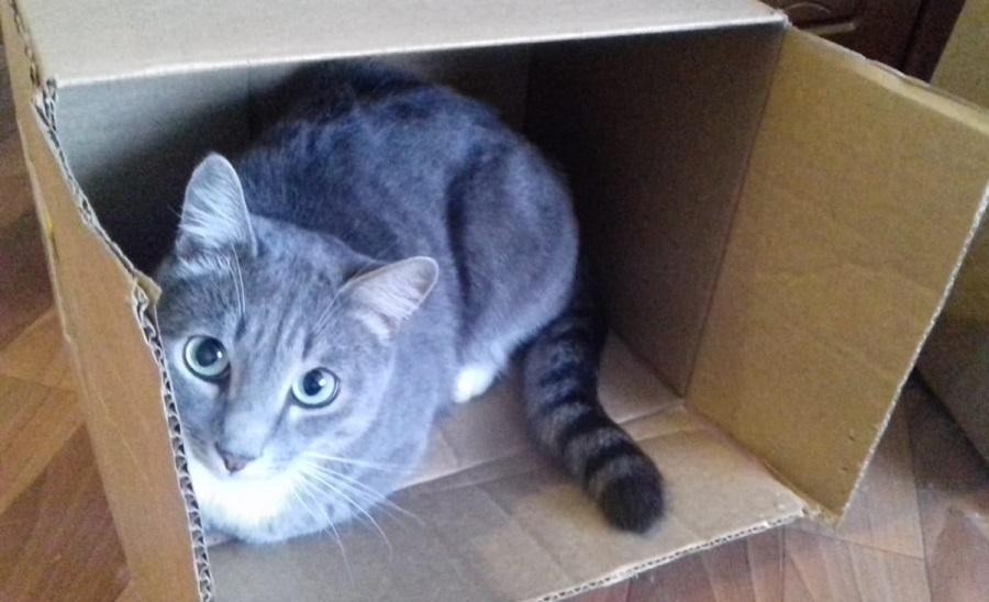 А коту досталась коробочка.. 01