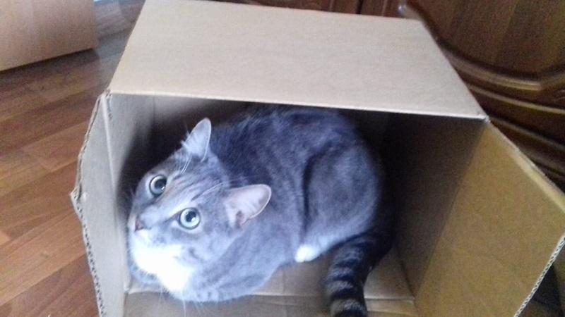 А коту досталась коробочка.. 02