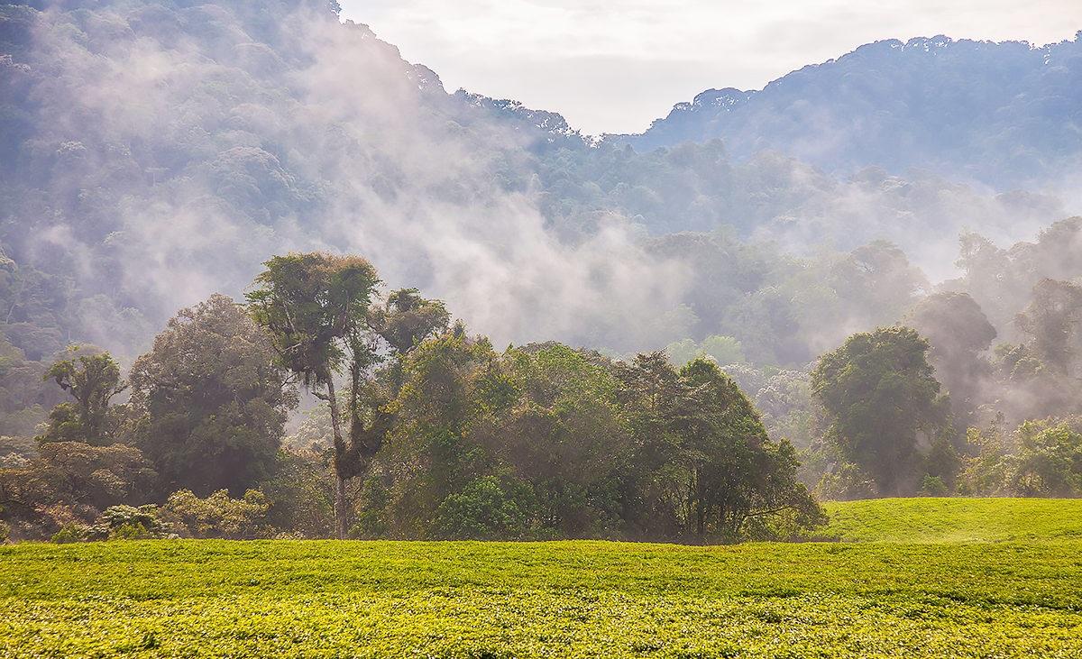 Фоторепортаж: Руанда - Земля тысячи холмов 01
