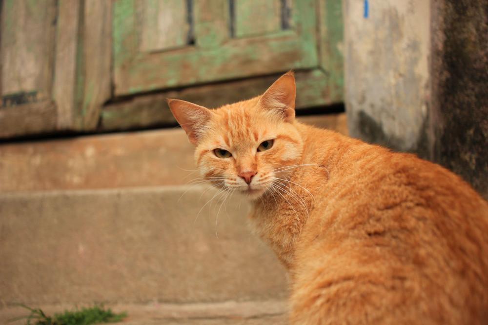 06 кот