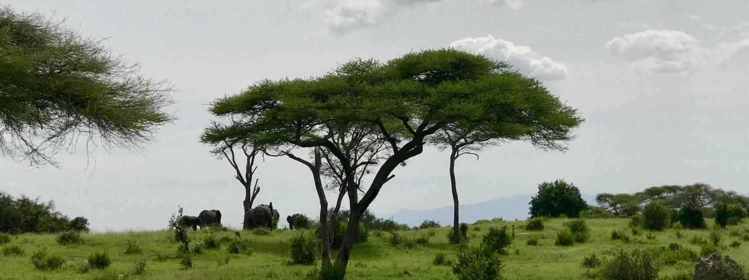 Фоторепортаж: Танзания - далёкая и невыразимо прекрасная африканская страна 03