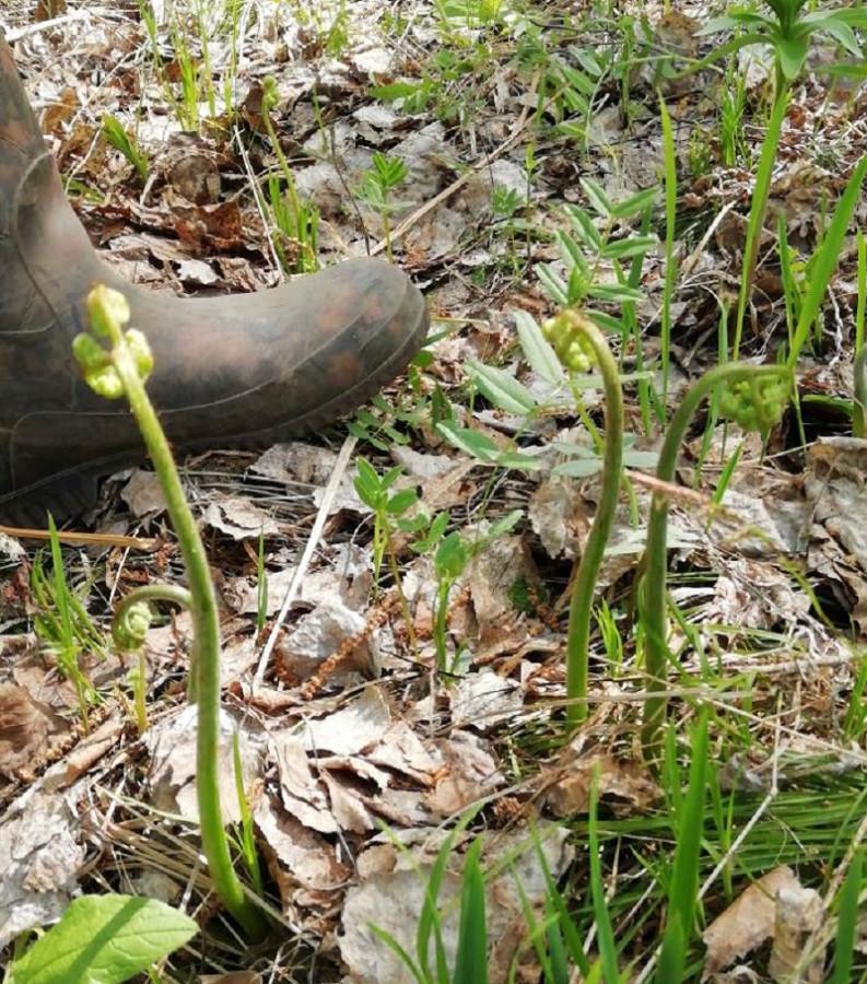 06 папоротник в лесу